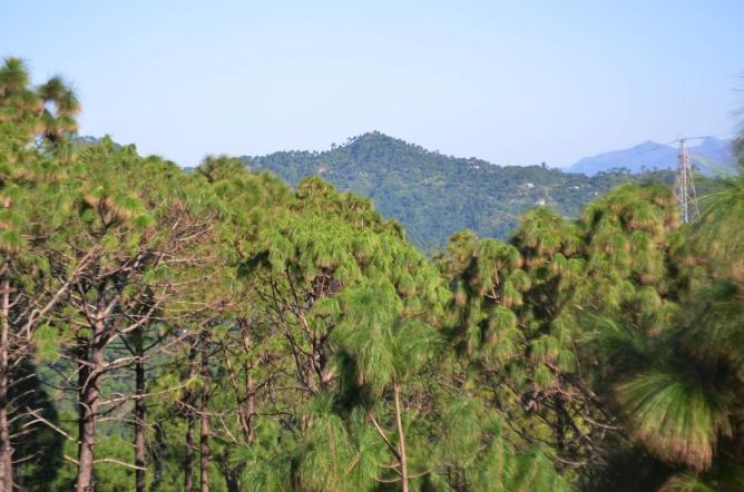 Jamta, Nahan, Himachal Pradesh, India